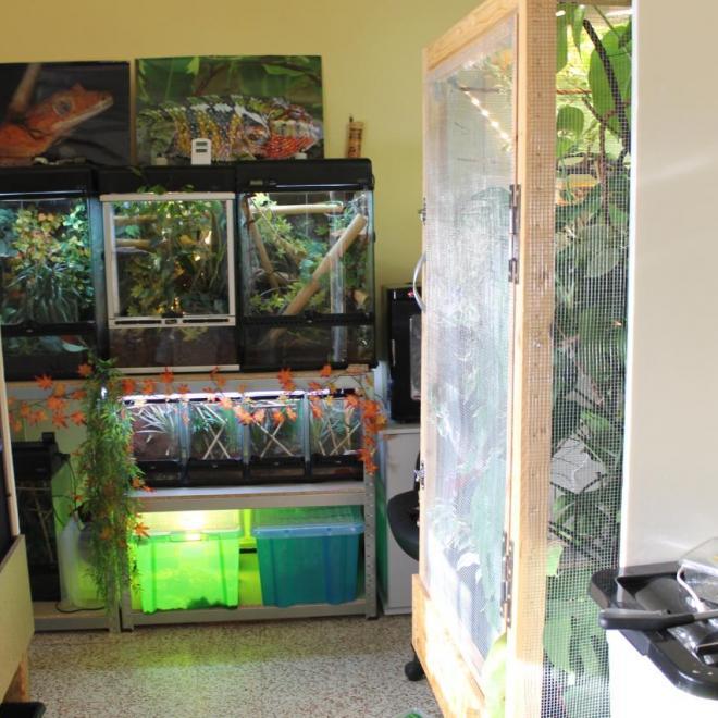 Les tropicaux (terrariums caméléons sur les côtés)